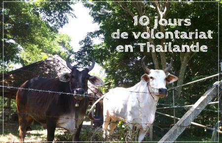 10 jours de volontariat en Thaïlande